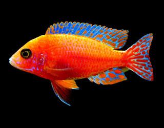 aquariumnexus