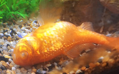 Why are my Fish Keep Dying? Top 10 Reasons & Prevention