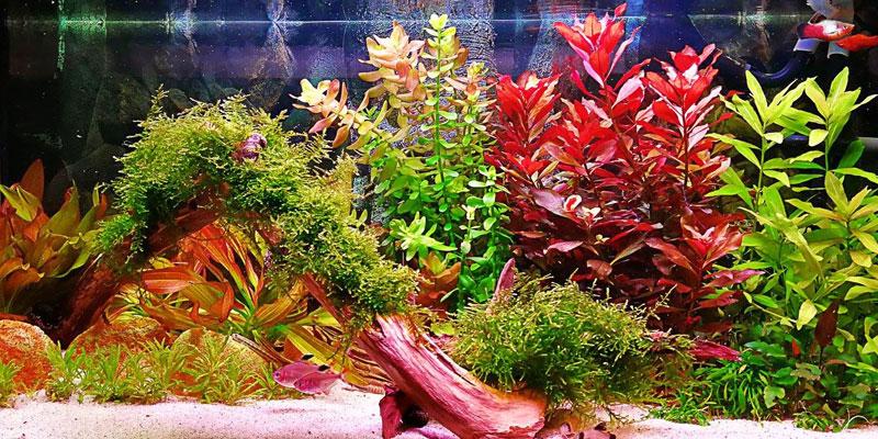 planted-aquarium