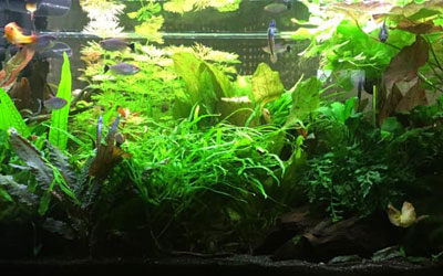 20 Gallon Aquarium Stocking Ideas
