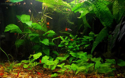aerate-aquarium-without-air-pump