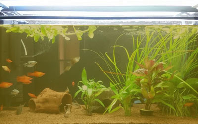 brown-yellow-water-fish-tank