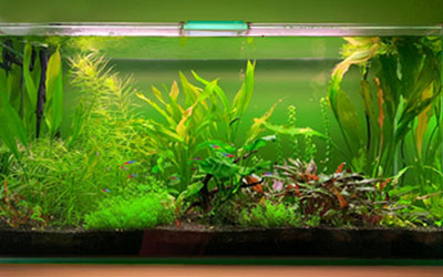 Best 10-Gallon Aquarium Kits for Beginners
