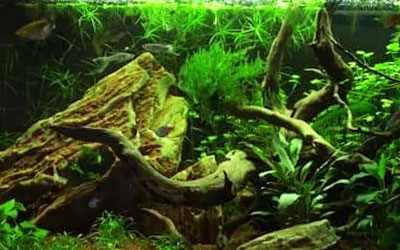 10 Best Fish for 5-Gallon Aquariums