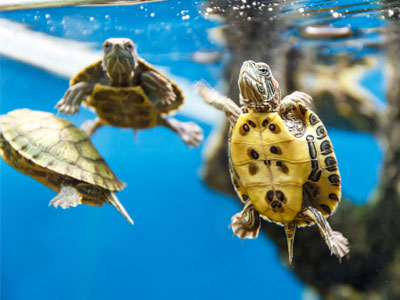 canister-filter-multiple-turtles