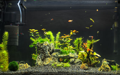 10 Gallon Fish Tank Setup