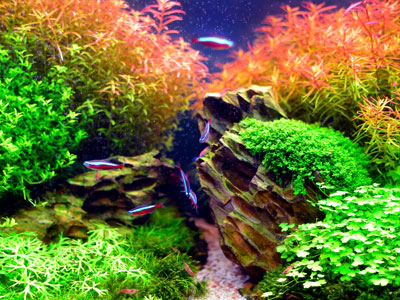 What is an Aquascape?
