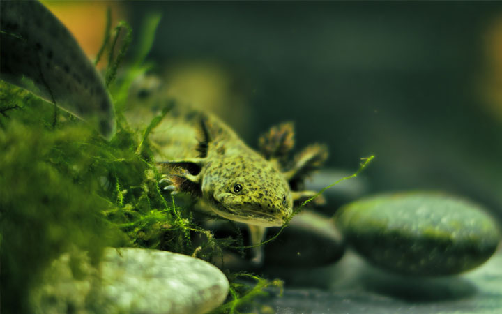 Setting Up Axolotl Tank