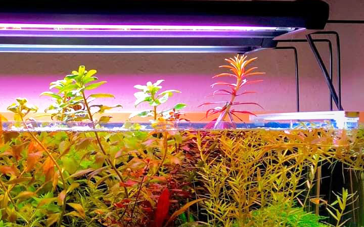 10 Best LED Lights for Planted Fish Tanks