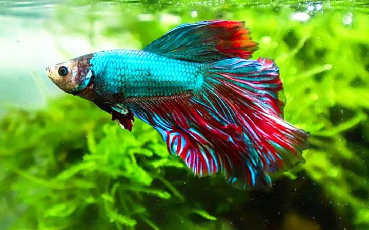 Plants & Decoration for Betta Fish