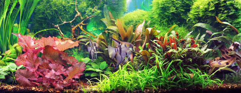 Choosing Aquarium Plants