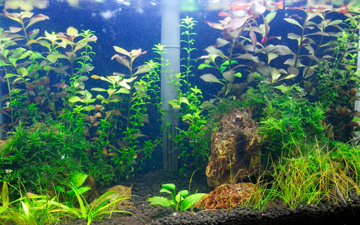 How to Cycle an Aquarium Fast in 7 Steps?