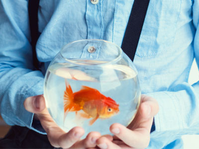 Can You Keep Goldfish in a Glass Bowl?