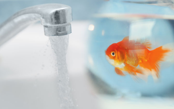 How to Make Tap Water Safe for Fish?