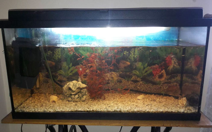 How to Repair  a Leaking Glass Aquarium?