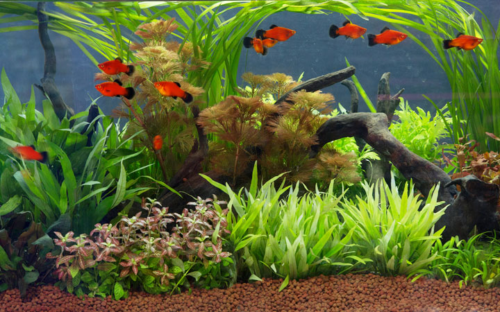 10 vs 20 Gallon Fish Tanks – Which is Best for Your?