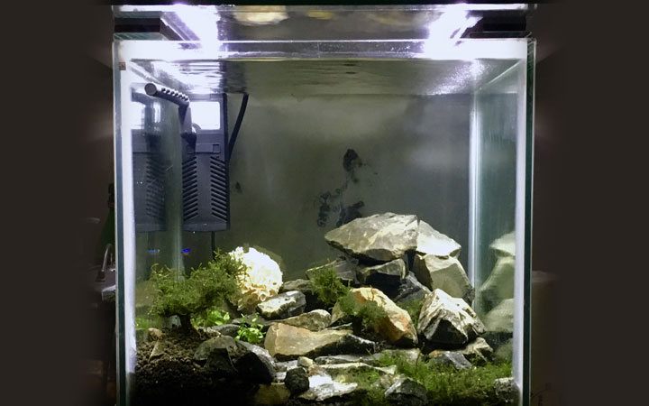 Best Aquarium Starter Kit