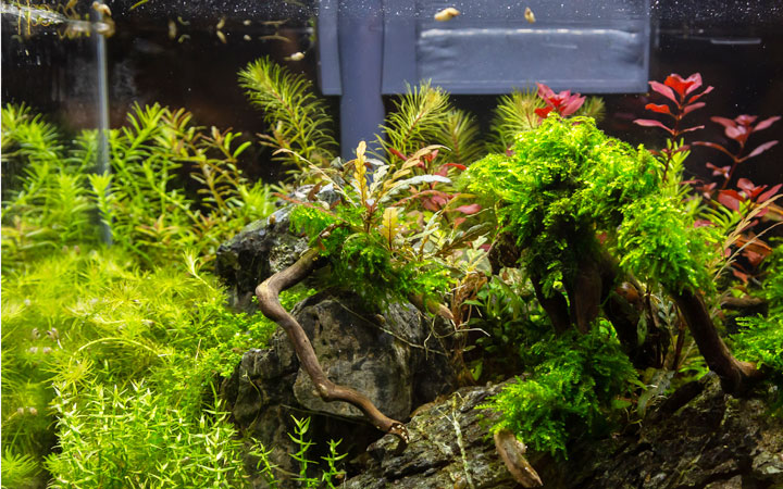 5 Best Filter for 10 Gallon Aquariums