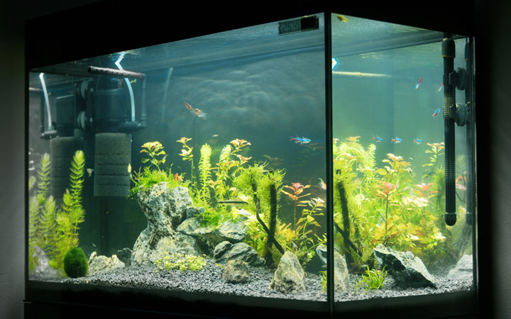 Best Filter for 20 Gallon Aquariums
