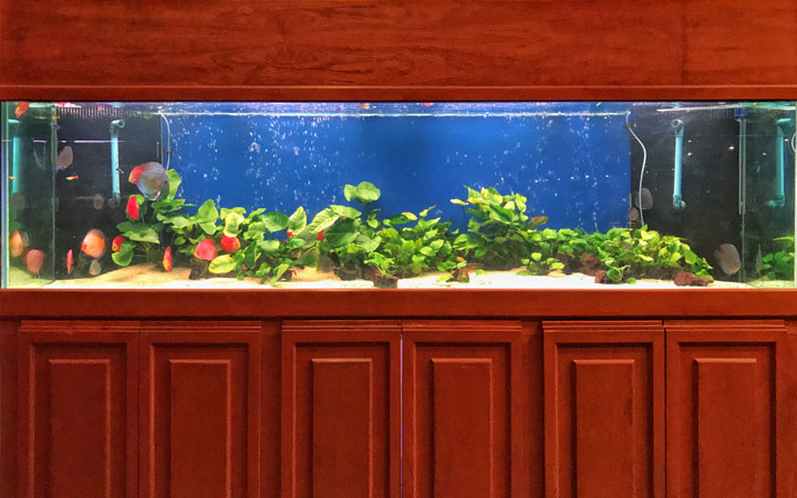 Why are Bigger Size Fish Tanks Better?