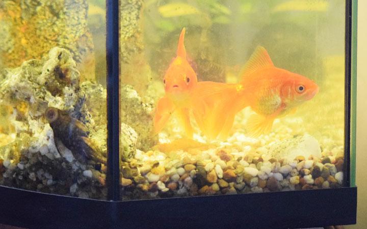 Best Aquarium Filter for Goldfish