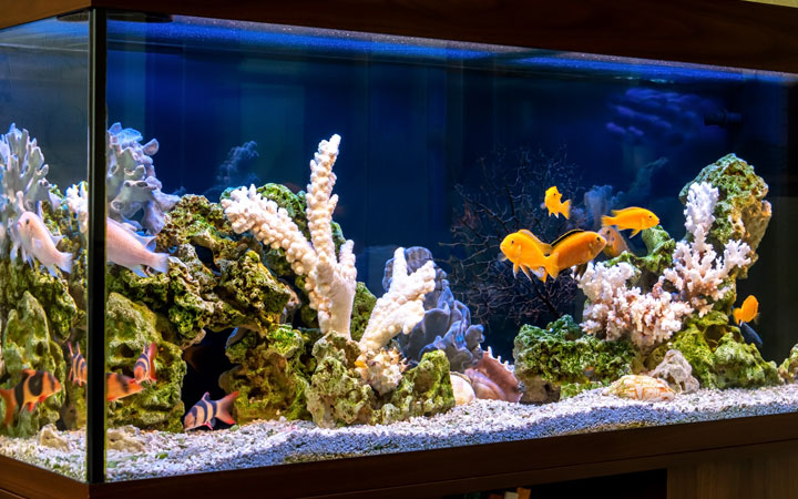 Best Aquariums Battery Backup for Power Outages