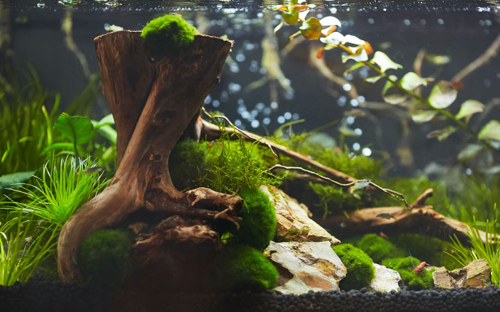 5 Best Filter for Shrimp Tanks