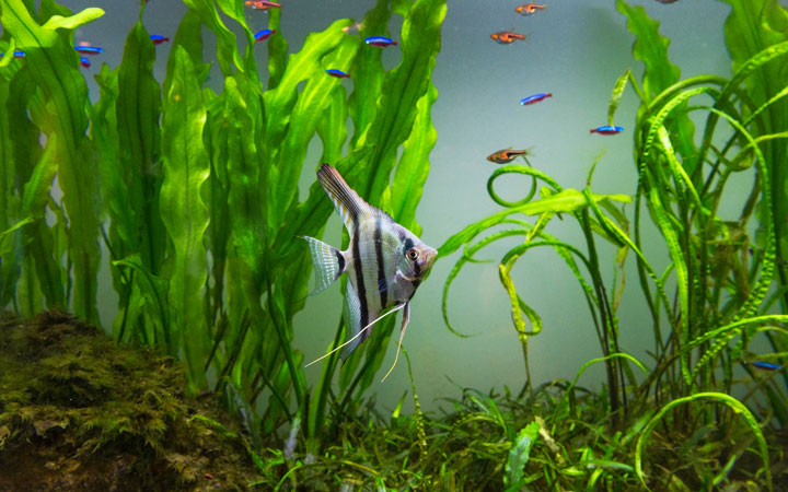 15 Best Freshwater Fish for Home Aquariums
