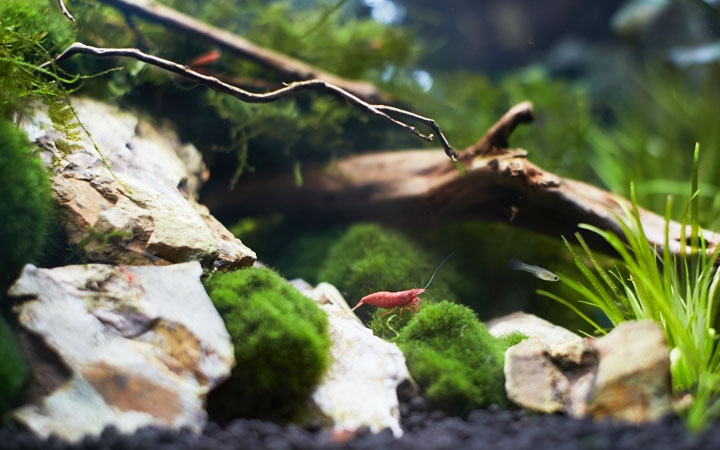 5 Best Nano Shrimp Tank Kits – Review & Buying Guide