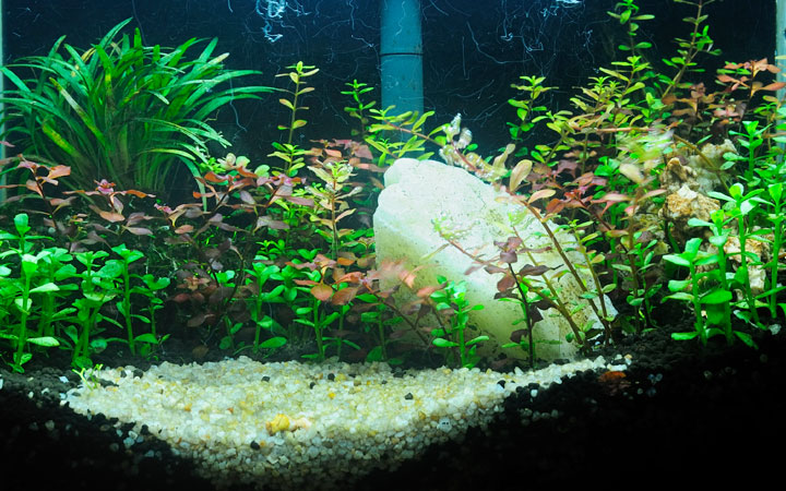 Can You Use Various Substrates in the same Fish Tank?