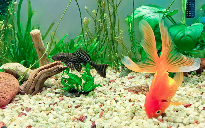 Should You Use Substrate in Your Fish Tank?