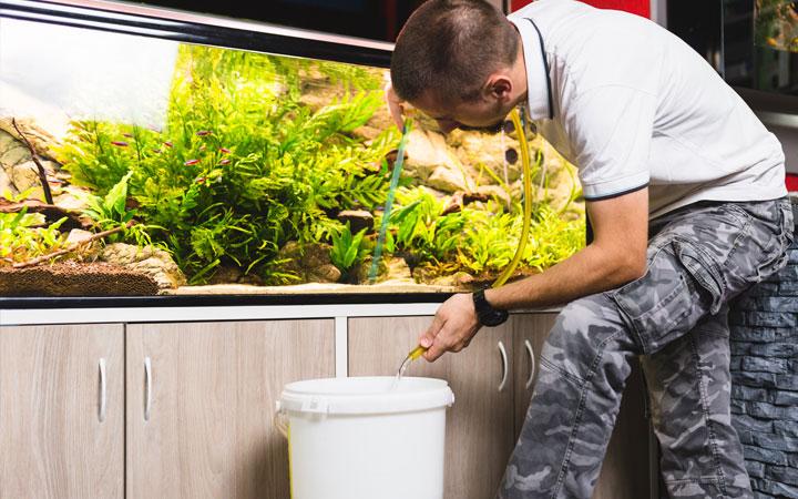 How Often to Change Water in Your Aquarium?