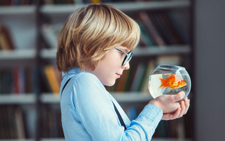 10 Best Pet Fish Species for Kids