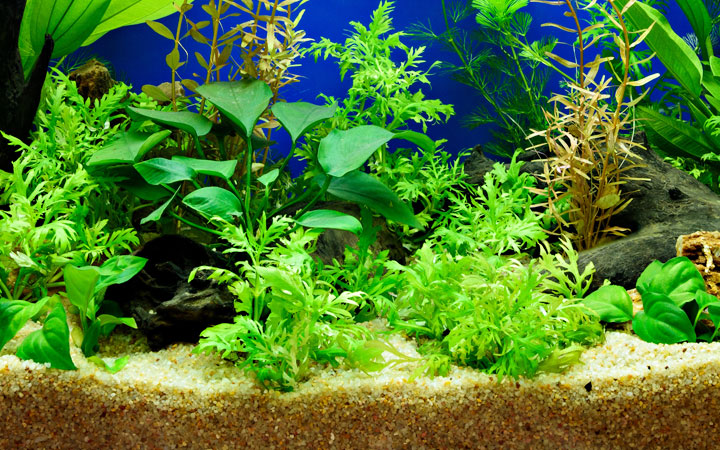 Can You Use Sand Substrate in a Planted Tank?
