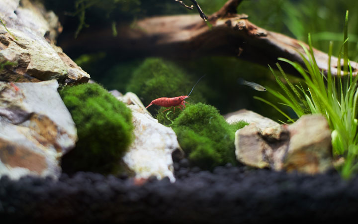How to Setup a Shrimp Tank?