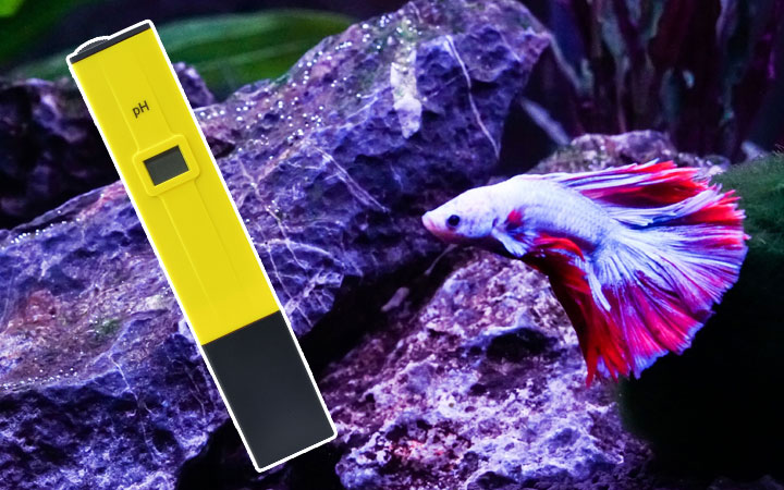 What is the Best pH Level for Betta Fish?