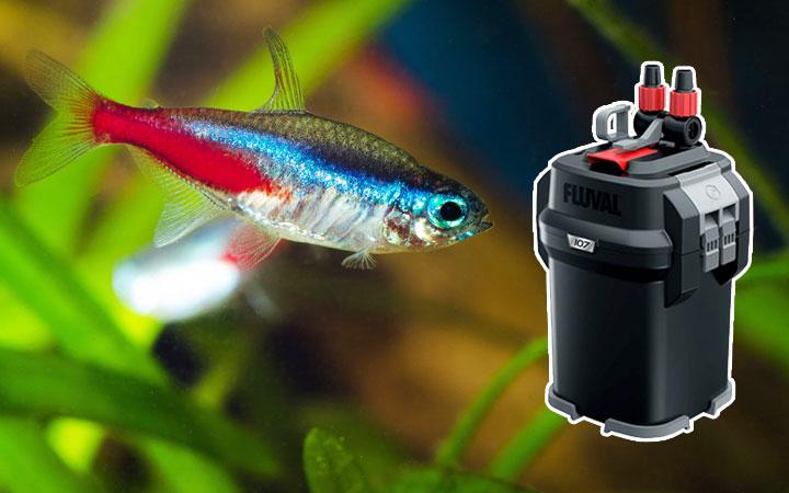 Do Neon Tetras Need a Filter?